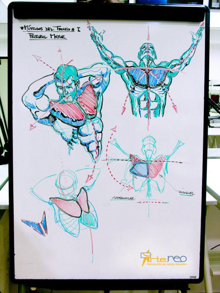 Anatomía Ejes Figura y Músculos Pectorales