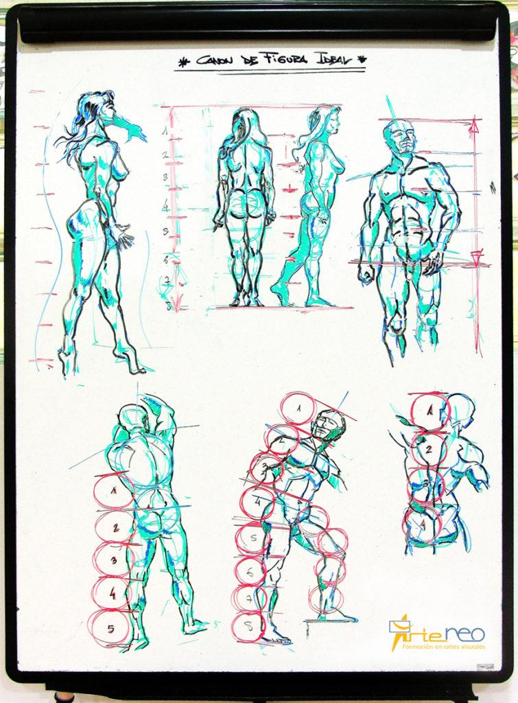 Pizarra Canon Anatomía