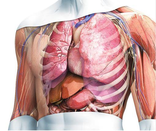Anatomía 3D Zygote