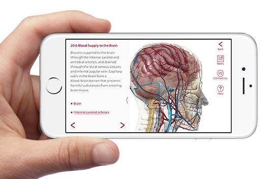 anatomía 3D visiblebody